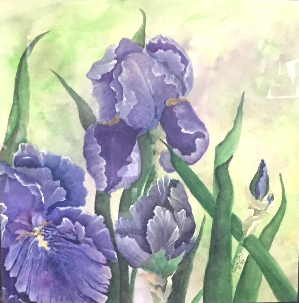"""""""Iris at Cascade Gardens"""" Second place awarded at the CWSF in the Professional Watercolor Category."""