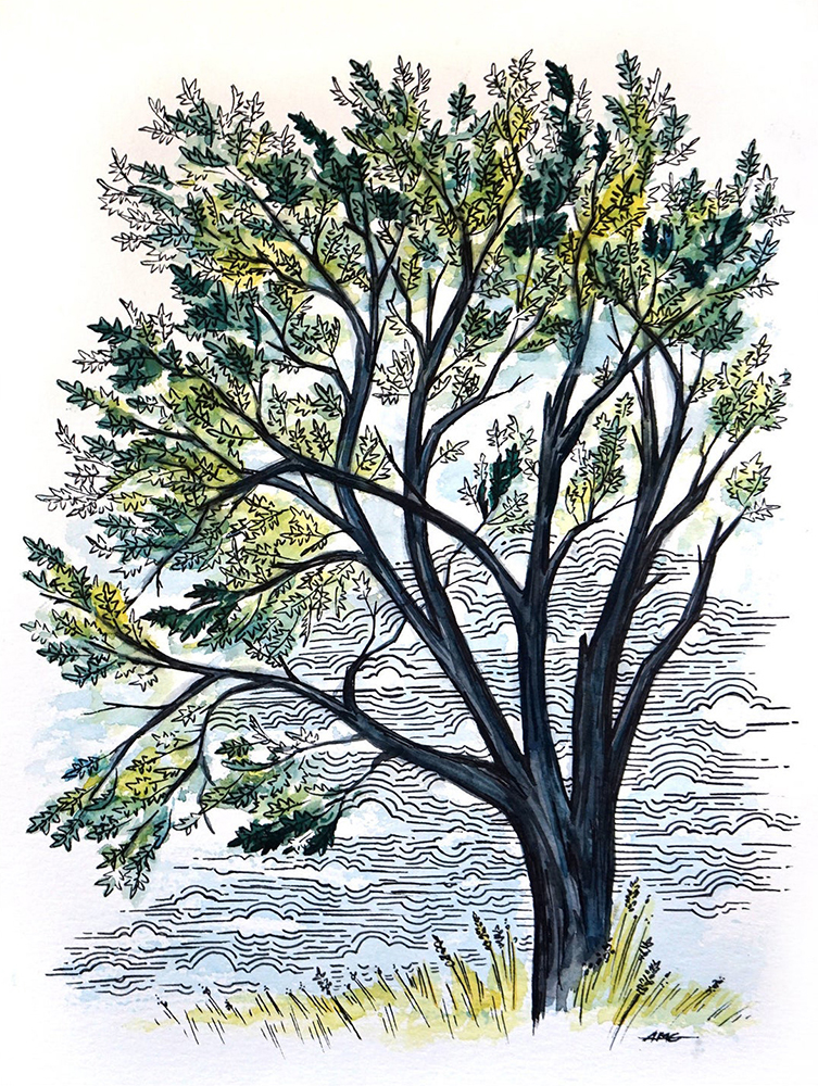 """Oak Tree with Clouds Watercolor Painting with Archival Pen Original - 9""""x12"""" Price: $45"""
